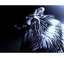 Black & Blue. Werewolf Photographic Print