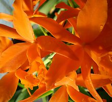 Orange Flowers by Louise Mixter