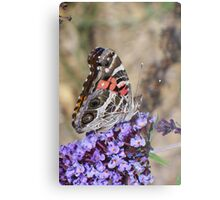 Painted Lady Lunching Metal Print