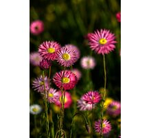 Spring Gift... Photographic Print