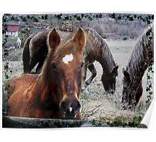 Spirit of a Horse Poster