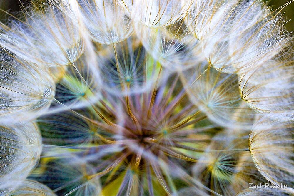 Dandelion Macro by Zach Pezzillo