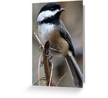 Chickadee: Macro View of a Spritely Bird Greeting Card