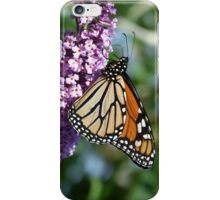 Magnificent Monarch iPhone Case/Skin