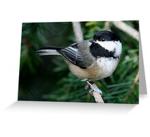 Chickadee: Among Feathery Evergreen Boughs Greeting Card