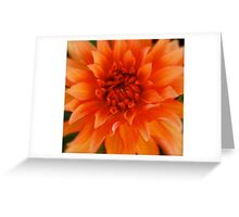 Blazing Macro Greeting Card