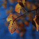 Spring leaves, Malden MA by gouldingken