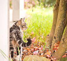 Spring kitten by -gila-