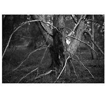 Spider tree by caitspeldewinde