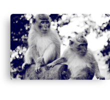 Two Monkeys Canvas Print