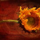 Sunflower by Alisa Gonzalez