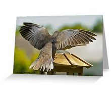 Ring Necked Dove Greeting Card