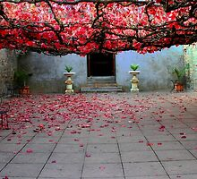 Vine covered courtyard by jwwallace