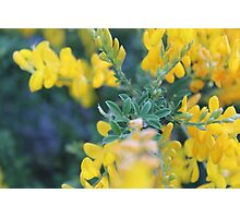 The Flower of Jane Eyre Photographic Print