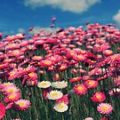 A Floral Bouquet by Sarah Moore
