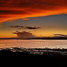 Orange Delight At Shellbay, Scotland. by Aj Finan