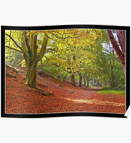 Mousehold Autumn 2 Poster