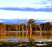 Ovens Wetland by Natalie Ord