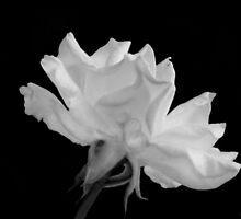9-11 Rememberance Bloom by Christina Sauber