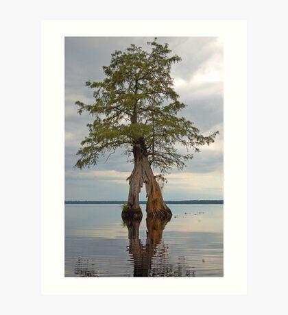 Lake Drummond Trees Art Print