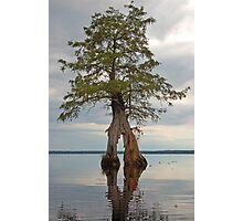 Lake Drummond Trees Photographic Print