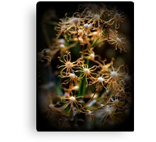 Winters Lines, the petals are done Canvas Print