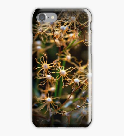 Winters Lines, the petals are done iPhone Case/Skin