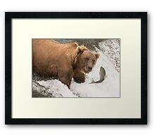 Bear about to catch salmon on waterfall Framed Print