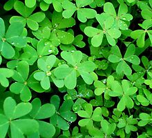 Clover - Find the 4 Leaf. by Carol Appelbee