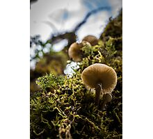 Moss and Mushrooms Photographic Print