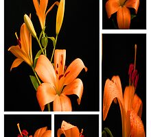 Lily.Collage. by Vitta