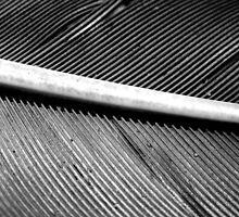 MACRO OF A FEATHER by Sandra  Aguirre