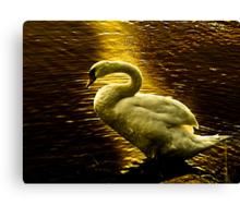 Swan at sunset Canvas Print