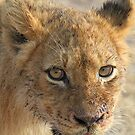 Happy well fed lion cub!(That buffalo tasted really good!) by jozi1
