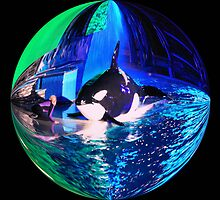 Sea WORLD at Night: by Cherubtree