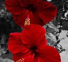 red flower 2  by scottci01