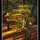 Autumn Light by Gordon Holmes