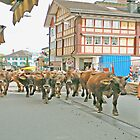 Appenzell Switzerland Cow March by Monica Engeler