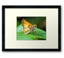 A Moth I Think Framed Print