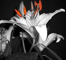 Lily, II by SilverLilyMoon