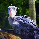 African Shoebill Stork by Judy Wanamaker