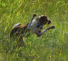 The cricket hunter by Tarolino