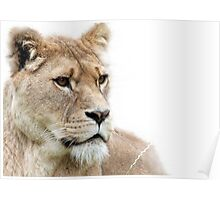 LIONESS II Poster