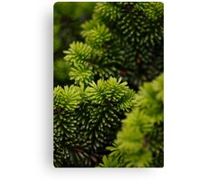 green layers Canvas Print