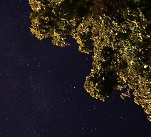 Starry Sky under the Maples by Aimee Stewart