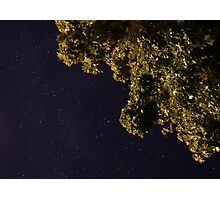 Starry Sky under the Maples Photographic Print