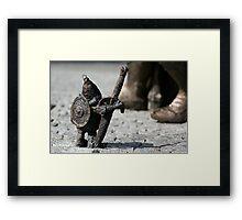 Dwarf... Framed Print