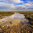 Rockpool by Geoff Carpenter