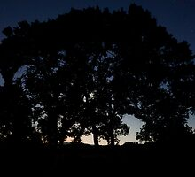 Moonlight behind a tree, Provence 3 a.m. by Revenant