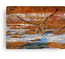 "Great Gray Owl ""Runway"" Canvas Print"